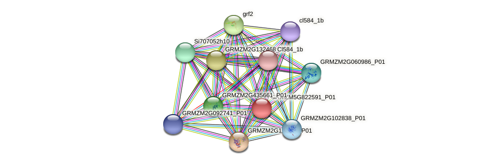 Zm.151028 protein (Zea mays) - STRING interaction network
