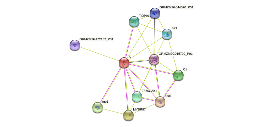 LC protein (Zea mays) - STRING interaction network