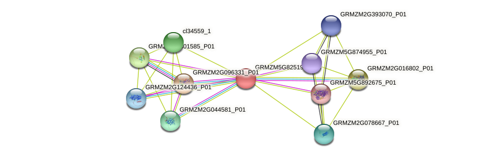 GRMZM5G825193_P03 protein (Zea mays) - STRING interaction network