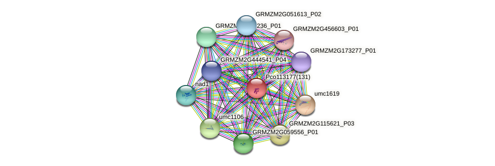 GRMZM5G825609_P01 protein (Zea mays) - STRING interaction network
