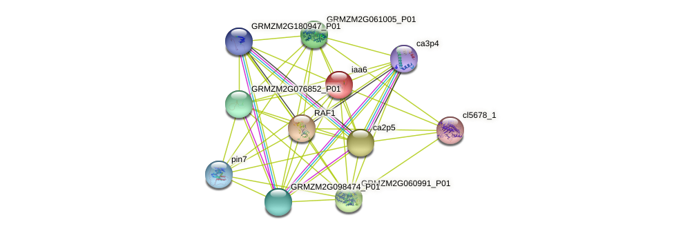 iaa6 protein (Zea mays) - STRING interaction network