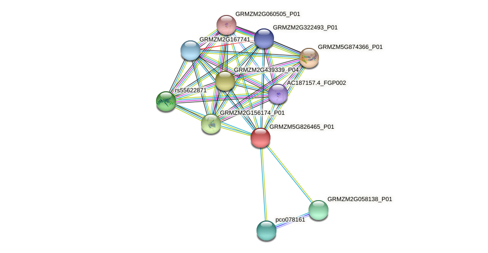 GRMZM5G826465_P01 protein (Zea mays) - STRING interaction network