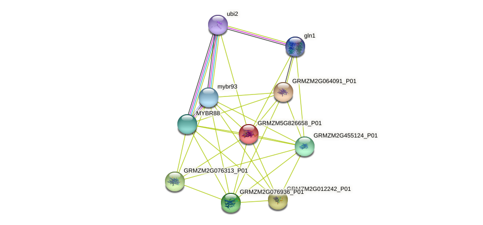 GRMZM5G826658_P01 protein (Zea mays) - STRING interaction network