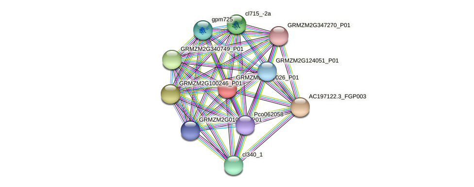 GRMZM5G827026_P01 protein (Zea mays) - STRING interaction network