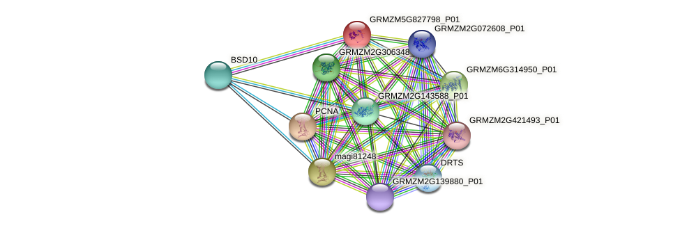 GRMZM5G827798_P01 protein (Zea mays) - STRING interaction network