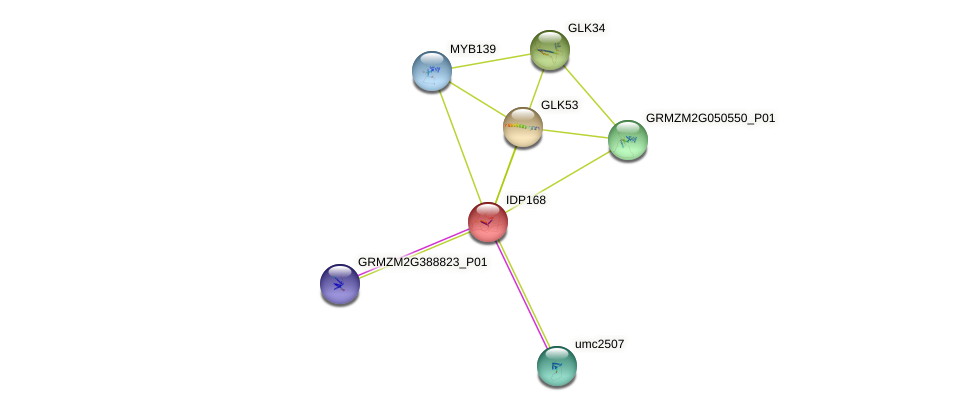 IDP168 protein (Zea mays) - STRING interaction network