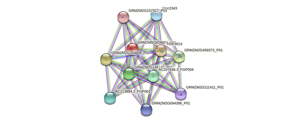 GRMZM5G828603_P01 protein (Zea mays) - STRING interaction network
