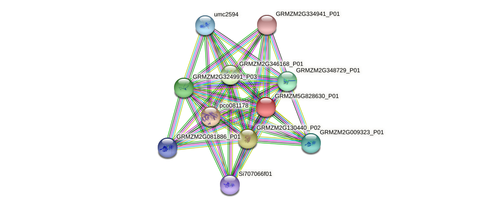 GRMZM5G828630_P01 protein (Zea mays) - STRING interaction network