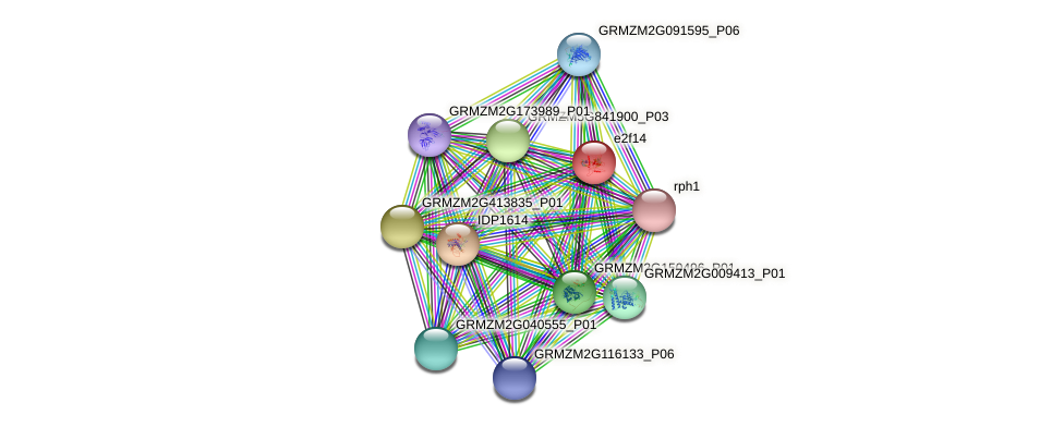 e2f14 protein (Zea mays) - STRING interaction network