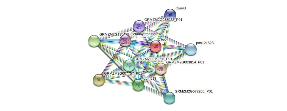 fat2 protein (Zea mays) - STRING interaction network