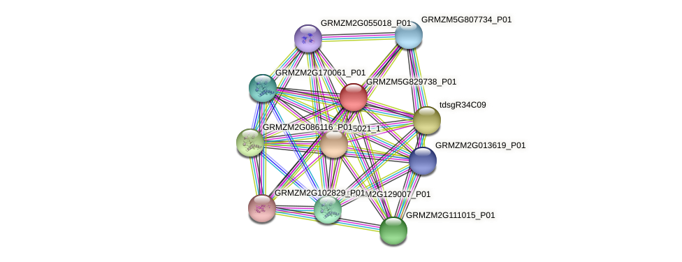 GRMZM5G829738_P01 protein (Zea mays) - STRING interaction network