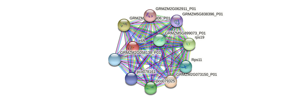 infA protein (Zea mays) - STRING interaction network