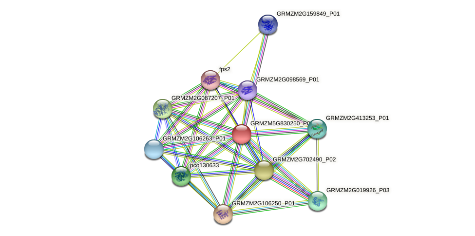 GRMZM5G830250_P01 protein (Zea mays) - STRING interaction network