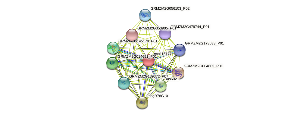 pco115177 protein (Zea mays) - STRING interaction network