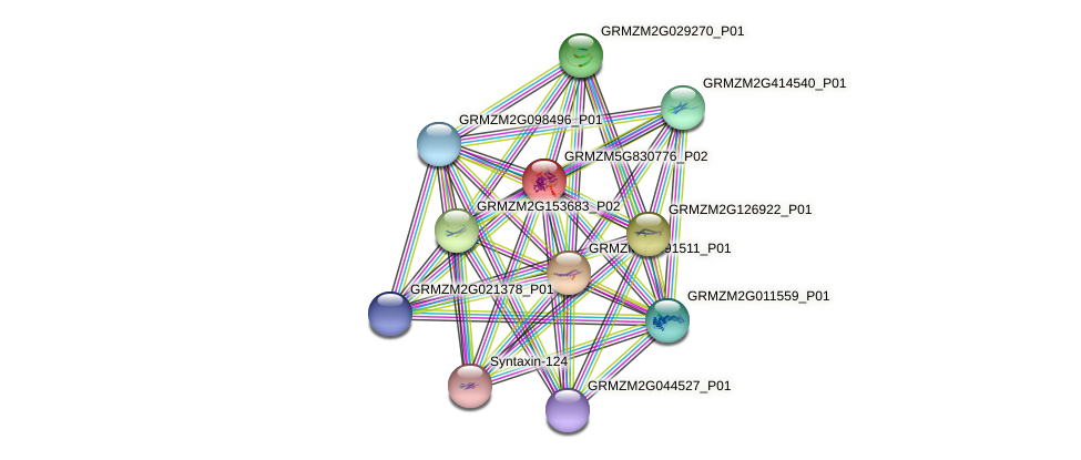 GRMZM5G830776_P02 protein (Zea mays) - STRING interaction network