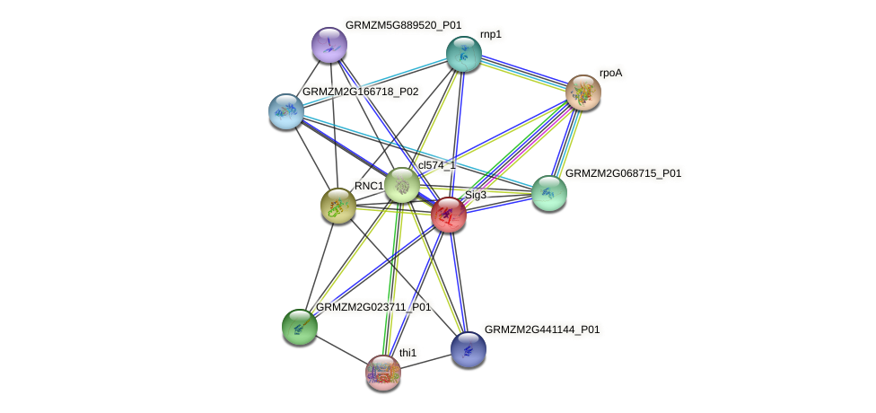Zm.12554 protein (Zea mays) - STRING interaction network