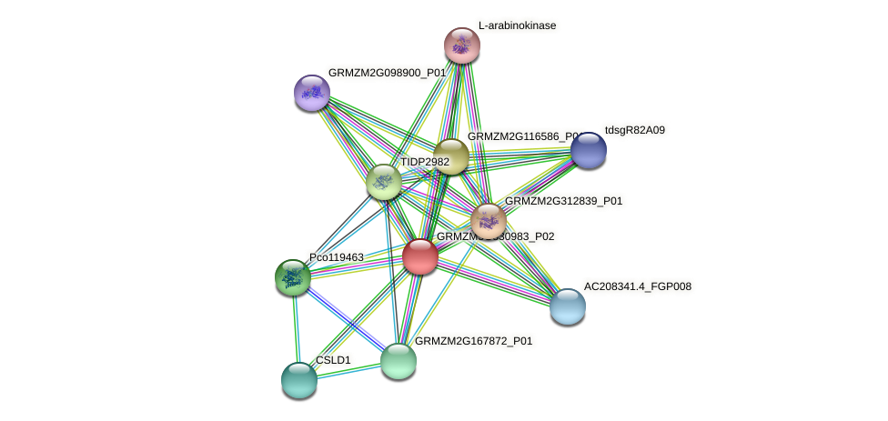 GRMZM5G830983_P02 protein (Zea mays) - STRING interaction network