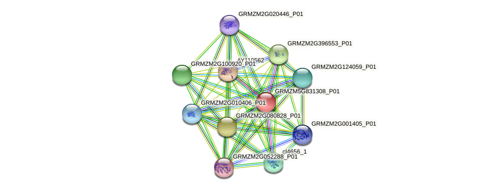 GRMZM5G831308_P01 protein (Zea mays) - STRING interaction network