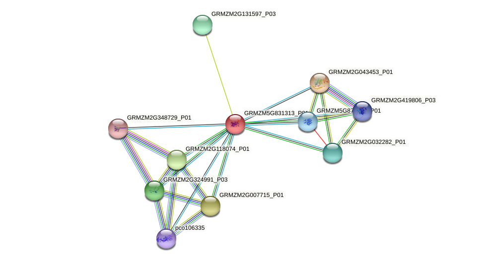 GRMZM5G831313_P01 protein (Zea mays) - STRING interaction network