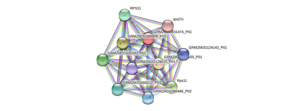 GRMZM5G831474_P01 protein (Zea mays) - STRING interaction network