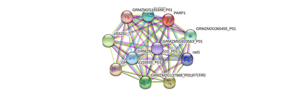 PARP1 protein (Zea mays) - STRING interaction network