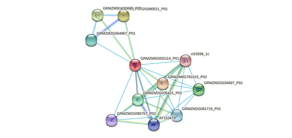 GRMZM5G832114_P01 protein (Zea mays) - STRING interaction network