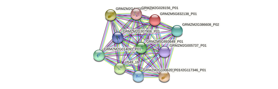 GRMZM5G832138_P01 protein (Zea mays) - STRING interaction network