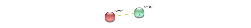 orf275 protein (Zea mays) - STRING interaction network