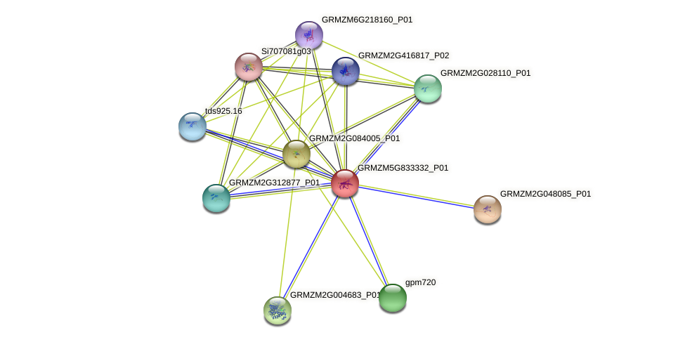 Zm.3570 protein (Zea mays) - STRING interaction network