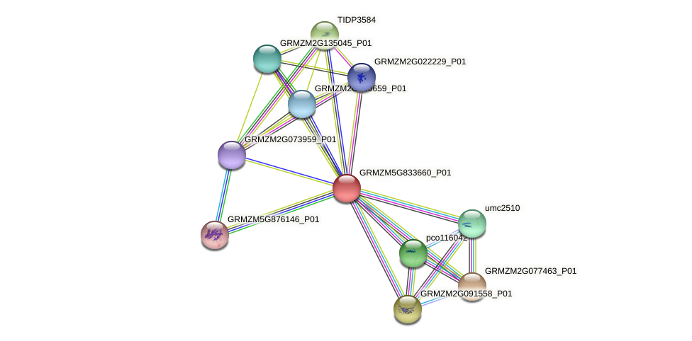 Zm.89216 protein (Zea mays) - STRING interaction network