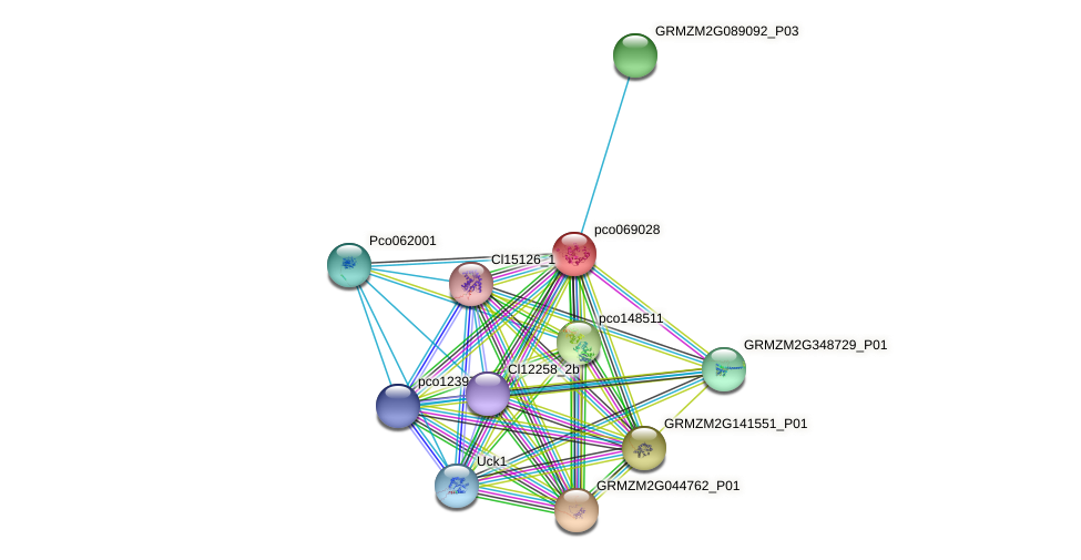 pco069028 protein (Zea mays) - STRING interaction network