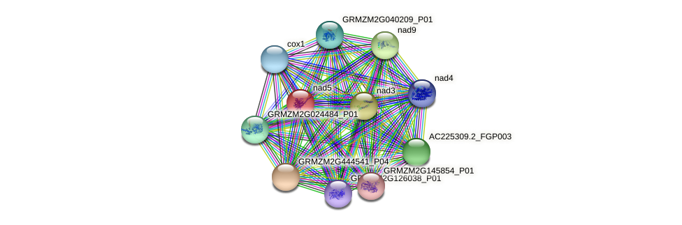 GRMZM5G834128_P01 protein (Zea mays) - STRING interaction network