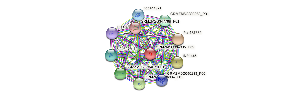 GRMZM5G834335_P02 protein (Zea mays) - STRING interaction network