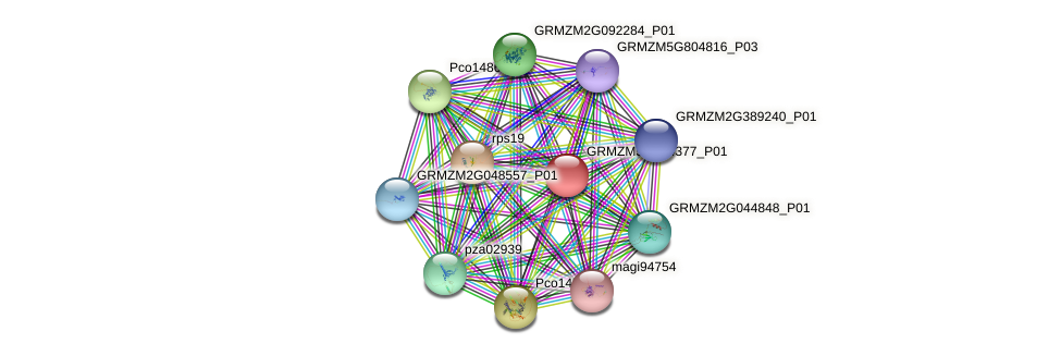 GRMZM5G834377_P01 protein (Zea mays) - STRING interaction network