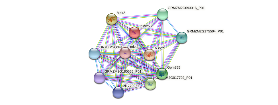 Zm.98984 protein (Zea mays) - STRING interaction network