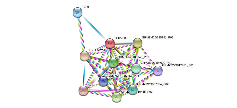 Zm.84393 protein (Zea mays) - STRING interaction network