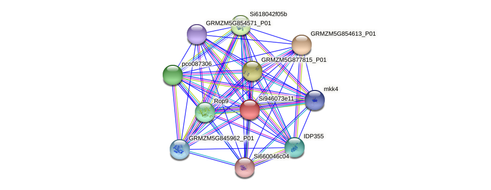 GRMZM5G835629_P02 protein (Zea mays) - STRING interaction network
