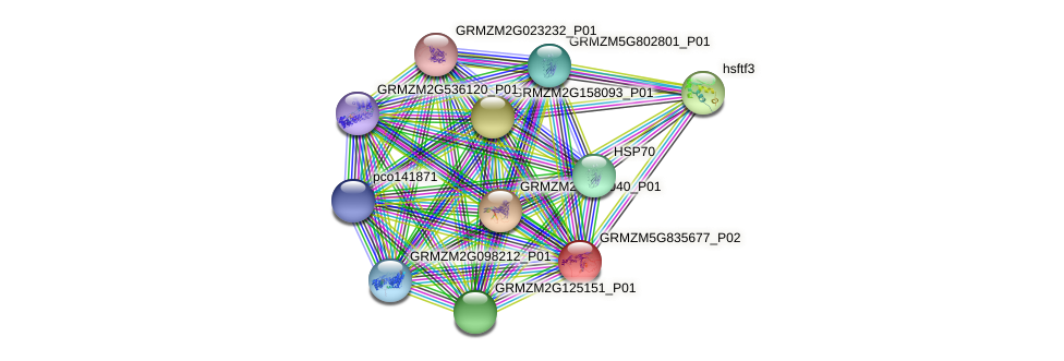 GRMZM5G835677_P02 protein (Zea mays) - STRING interaction network