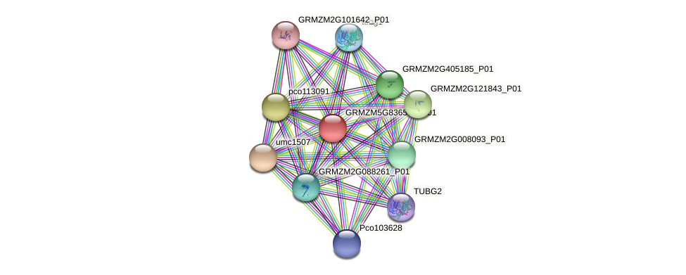 GRMZM5G836567_P01 protein (Zea mays) - STRING interaction network