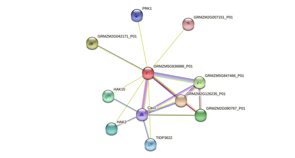 GRMZM5G836886_P01 protein (Zea mays) - STRING interaction network