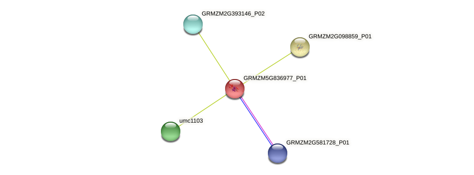GRMZM5G836977_P01 protein (Zea mays) - STRING interaction network