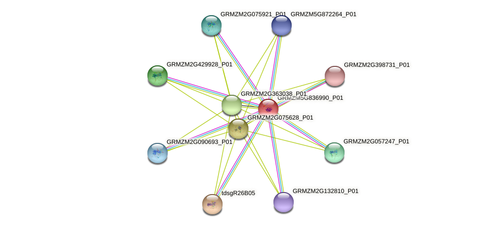 GRMZM5G836990_P01 protein (Zea mays) - STRING interaction network