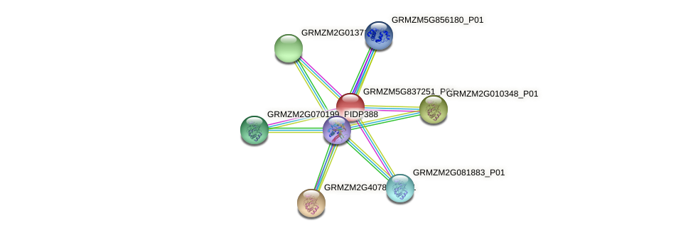 GRMZM5G837251_P01 protein (Zea mays) - STRING interaction network