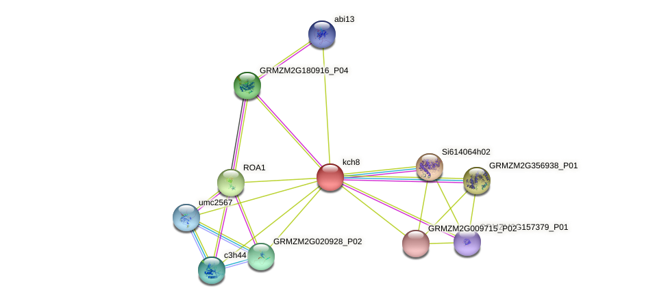 GRMZM5G838773_P01 protein (Zea mays) - STRING interaction network