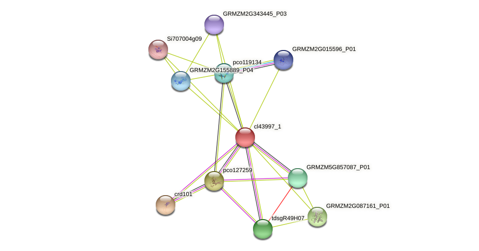 cl43997_1 protein (Zea mays) - STRING interaction network