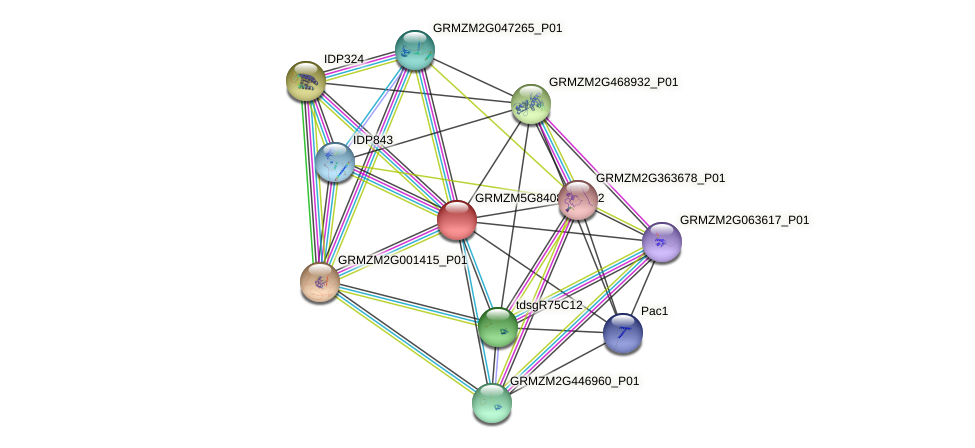 GRMZM5G840852_P02 protein (Zea mays) - STRING interaction network