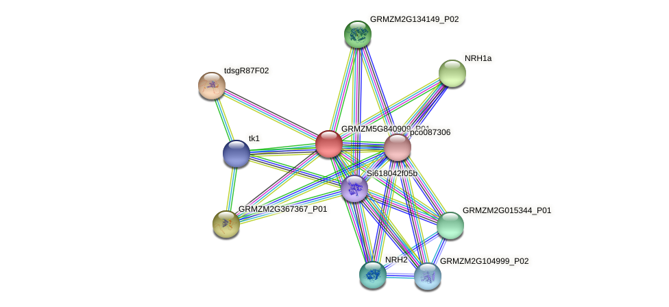 GRMZM5G840909_P01 protein (Zea mays) - STRING interaction network