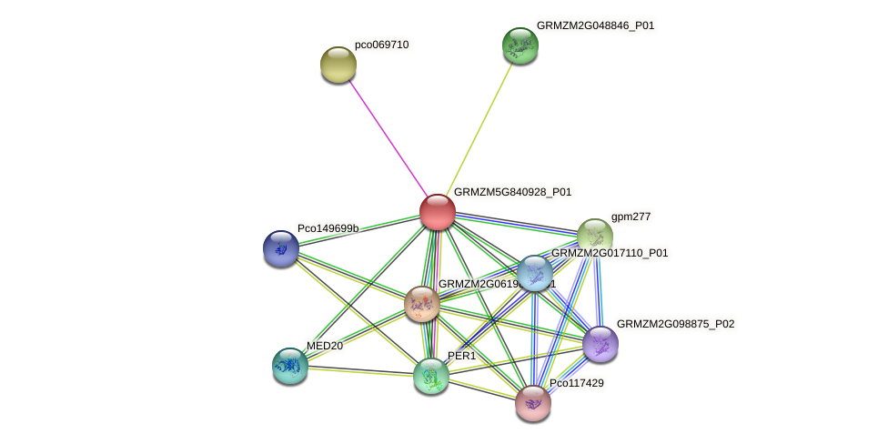 100216749 protein (Zea mays) - STRING interaction network