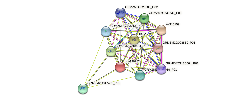 GRMZM5G840946_P03 protein (Zea mays) - STRING interaction network