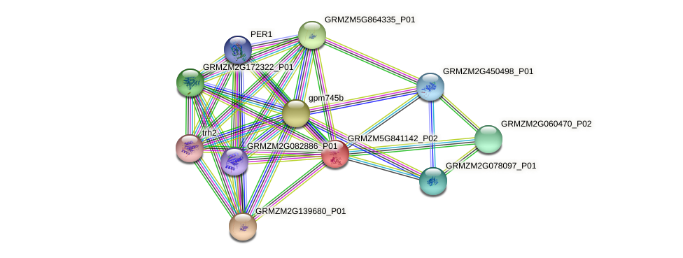 100284045 protein (Zea mays) - STRING interaction network